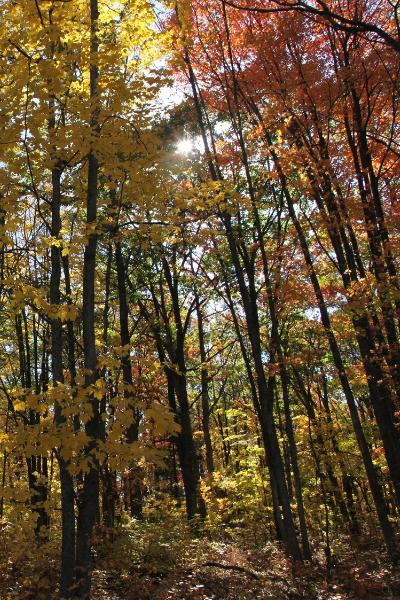 Downriver Trees on Oakwood Metro Park trail