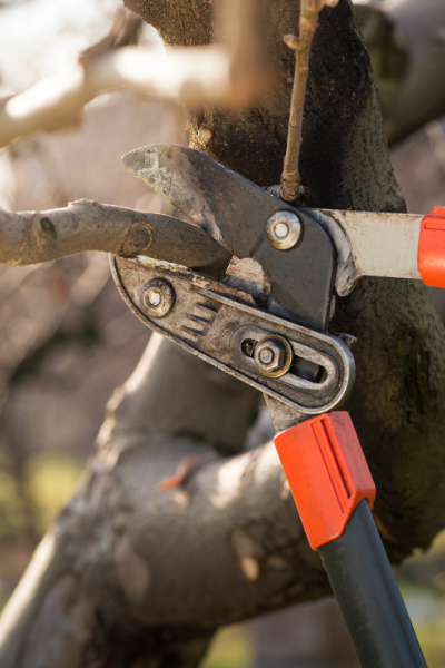 Pruning a Tree in Grosse Ile, Michigan