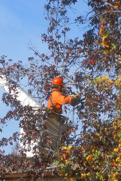 Trimming a tree in Brownstown, MI