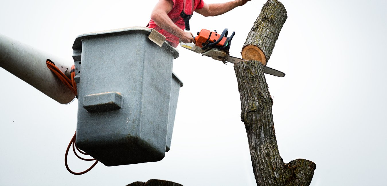 Tree Removal Service Worker near Old Town