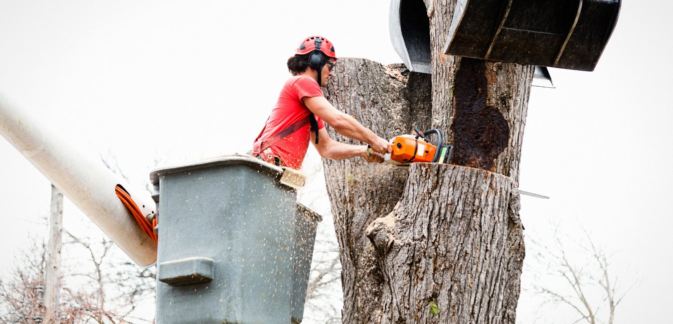 A service worker conducting a tree removal safely with a chainsaw