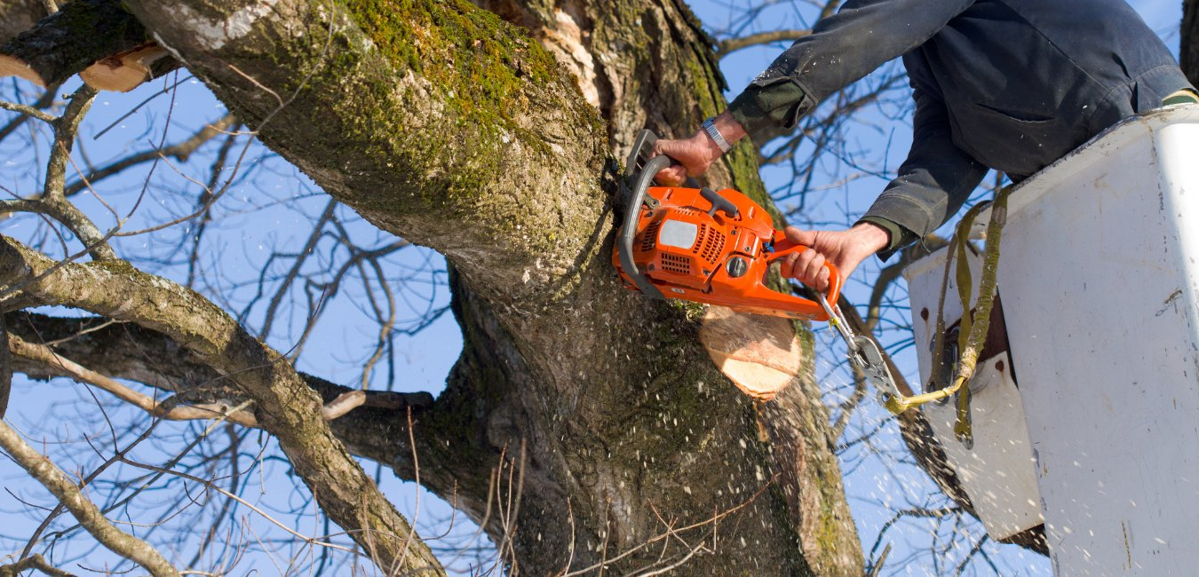 A service worker using dangerous machinery to trim a tree limb