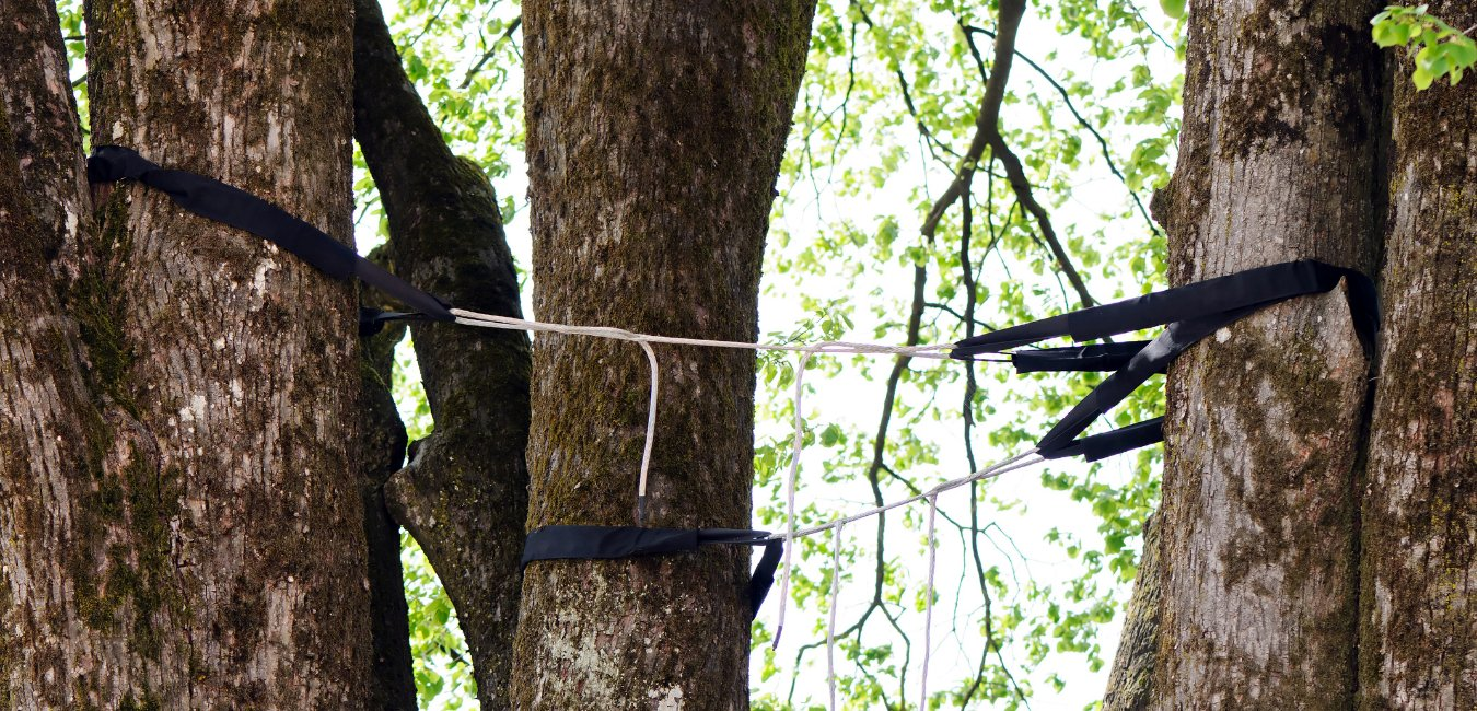 A photo of a tree being supported with cabling and bracing