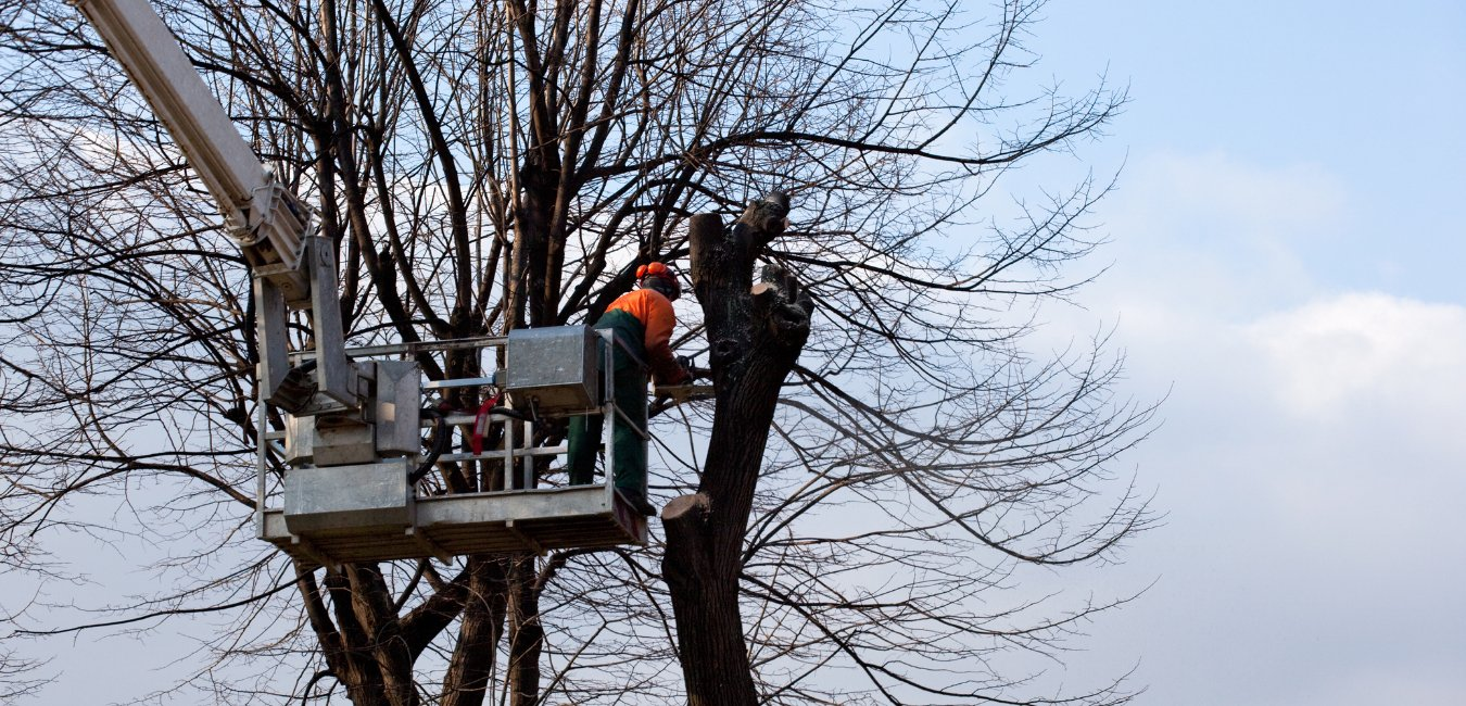 A photo of a tree service worker in a lift using a chainsaw to remove a tree