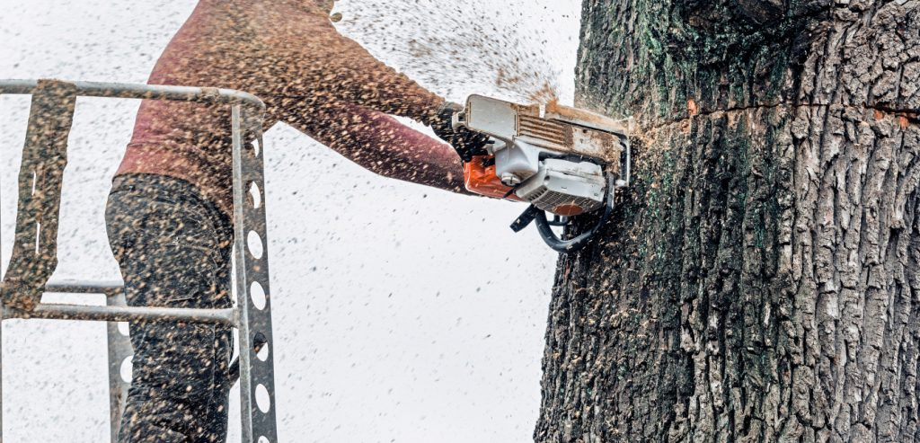 A photo of a tree service worker using a chainsaw to cut down a tree